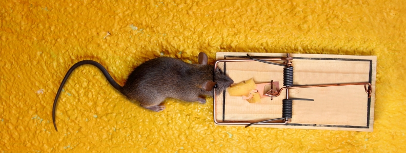 Most Common Pest Control Myths
