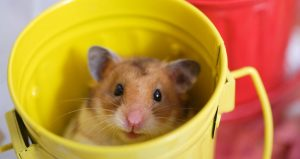 mouse in a small bucket